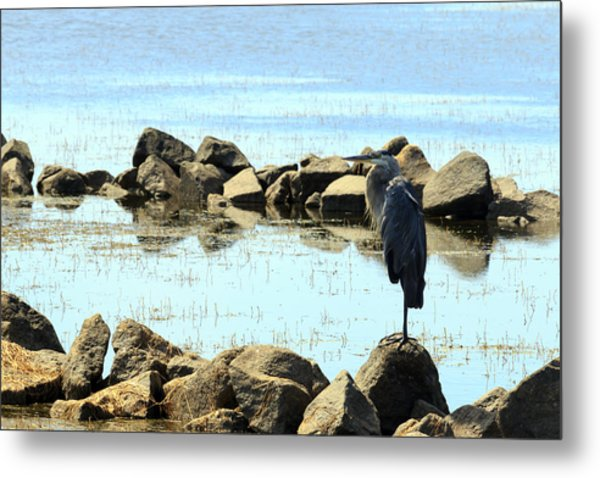 Heron On The Rocks Metal Print
