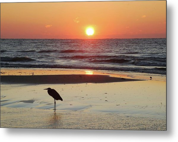 Heron Watching Sunrise Metal Print