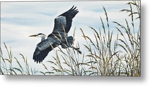 Herons Flight Metal Print