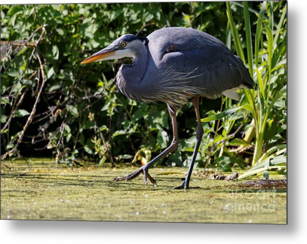 Metal Print featuring the photograph Herons Pond by Sue Harper