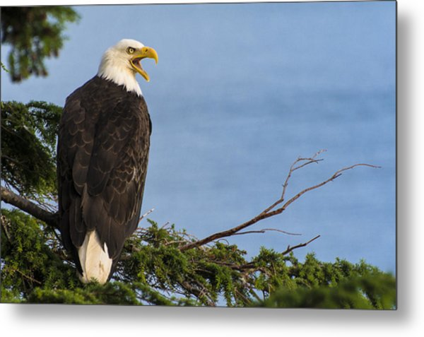 Metal Print featuring the photograph Hey by Gary Lengyel