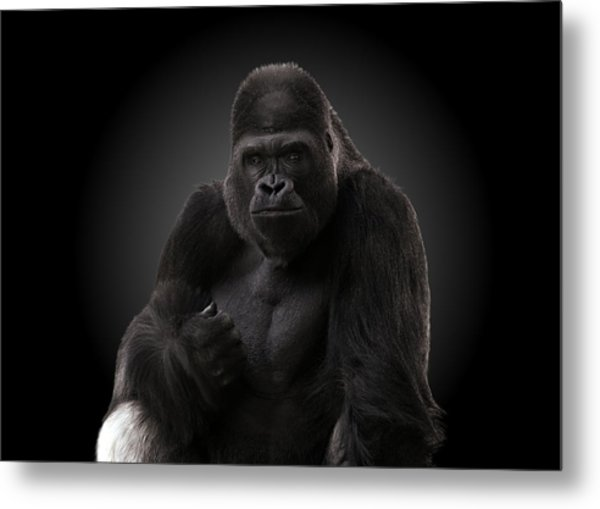 Hey There - Gorilla Metal Print