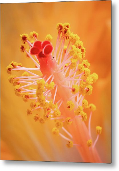 Metal Print featuring the photograph Hibiscus-1 by David Coblitz