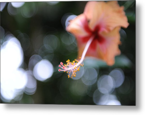 Hibiscus Metal Print by Jessica Rose