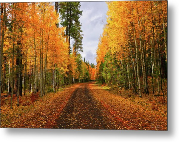 Hidden Paths Metal Print