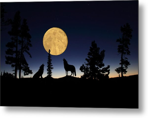 Hidden Wolves Metal Print