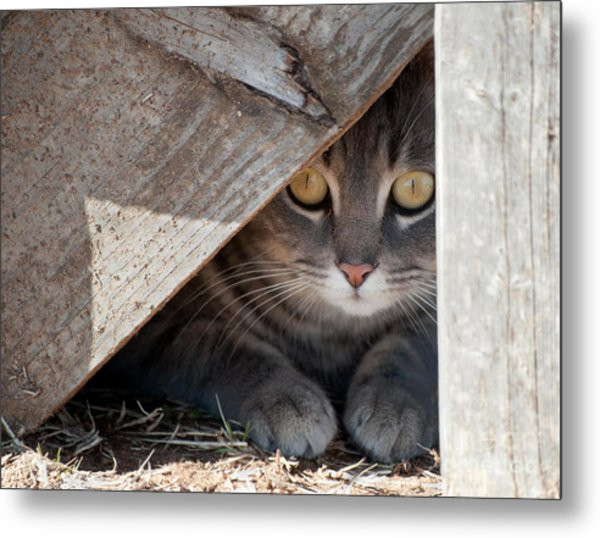 Hide A Kitty Metal Print