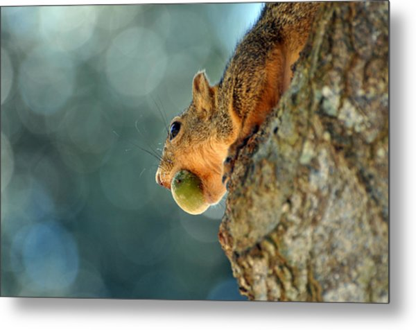 Hiding Dinner Metal Print by Teresa Blanton