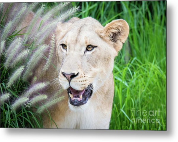 Hiding In Grass Metal Print