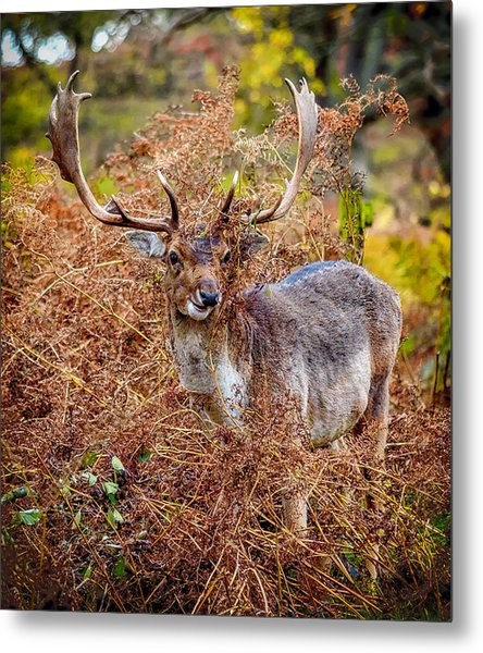 Hiding In The Bracken Metal Print
