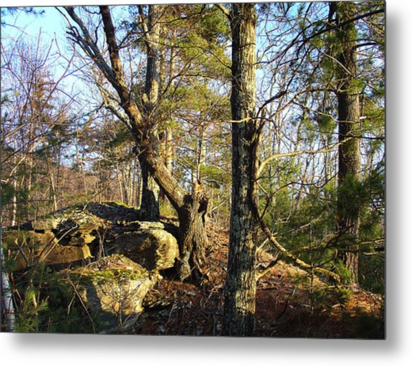 High Atop White's Road Solitude Is Met By Dawn Metal Print by Terrance DePietro