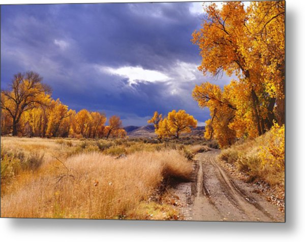 High Desert Autumn II Metal Print by SB Sullivan