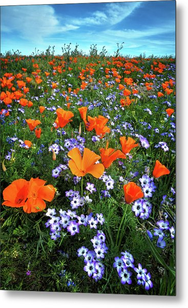 High Desert Wildflowers Metal Print