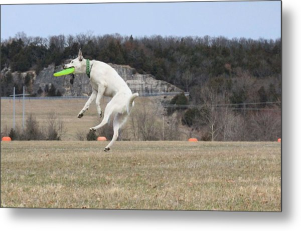 High Flying Max Metal Print