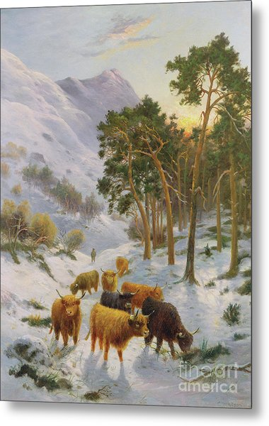 Highland Cattle In A Winter Landscape Metal Print