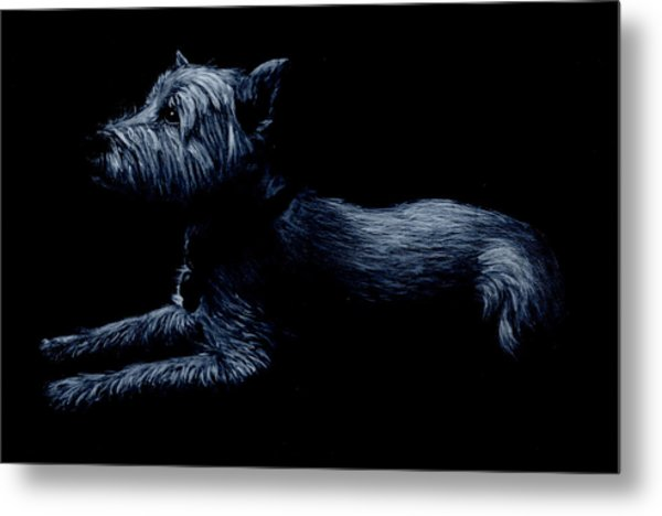 Highland Terrier Metal Print
