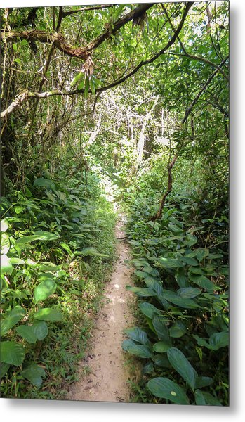 Hiking Path In The Atlantic Forest Metal Print