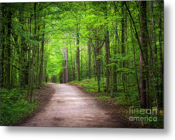 Metal Print featuring the photograph Hiking Trail In Green Forest by Elena Elisseeva