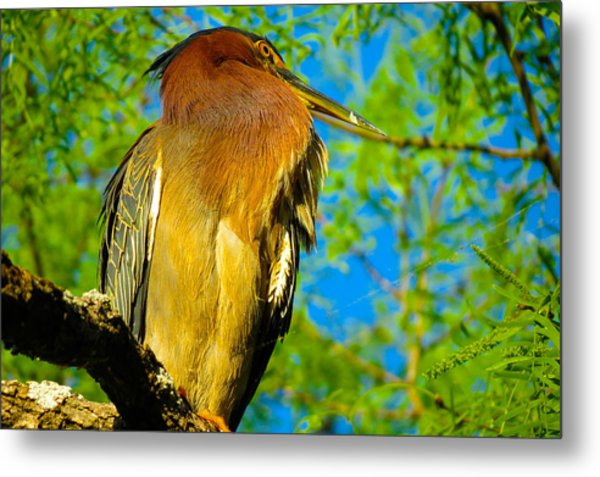 Hill Country Perch Metal Print