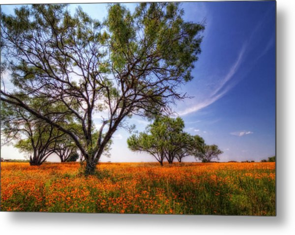 Hill Country Spring Metal Print