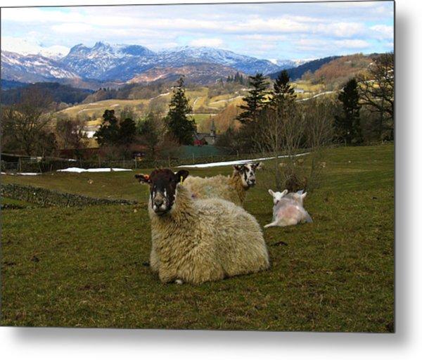 Hill Sheep Metal Print