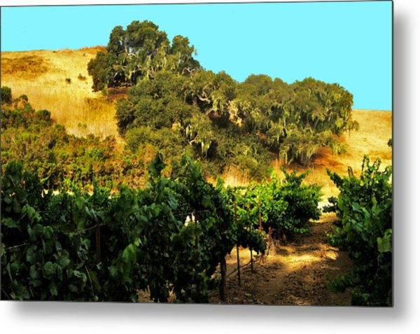 hill side vineyard 'n Oaks Metal Print