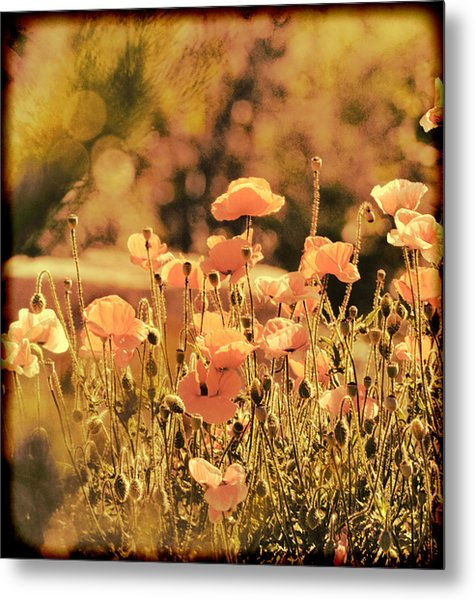 Hillside Poppies And Sunset Metal Print