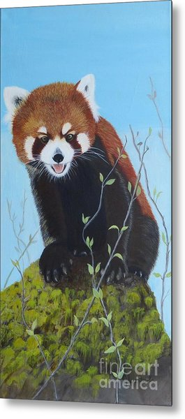 Himalayan Red Panda Metal Print