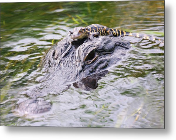 Hitchin' A Ride. Metal Print