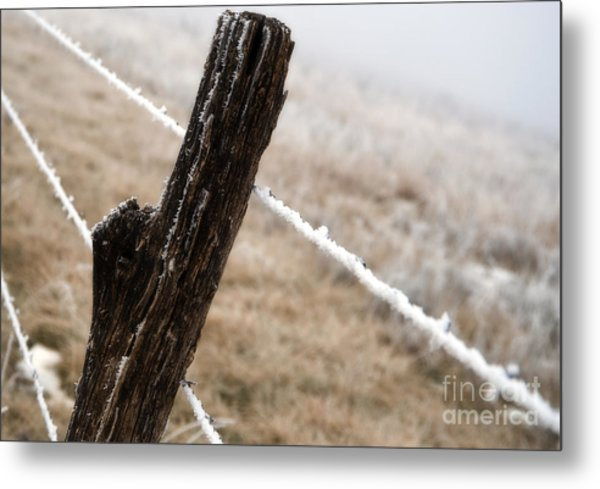 Hoarfrost And Fence Metal Print by Fred Lassmann