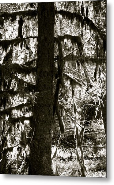 Hoh Rain Forest Metal Print by Sonja Anderson