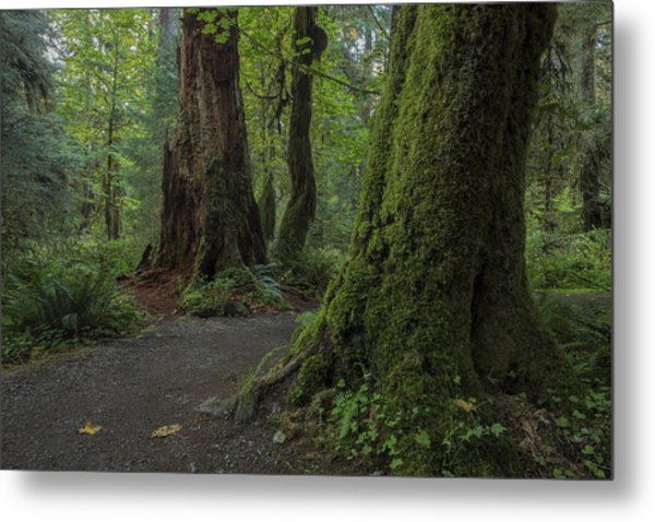 Hoh Rainforest Metal Print by Dave Crowl