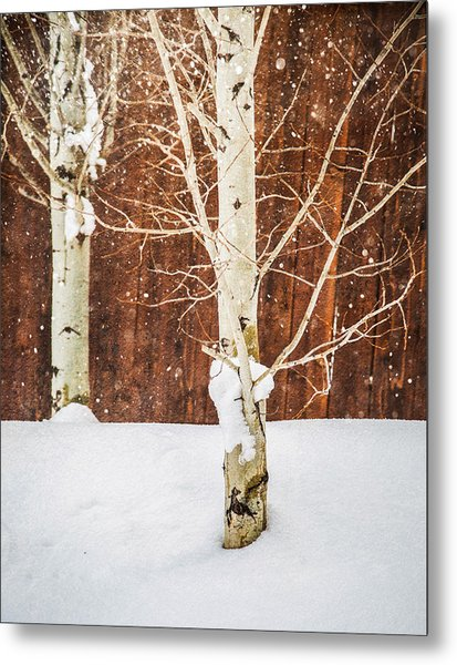 Holiday Aspens Metal Print