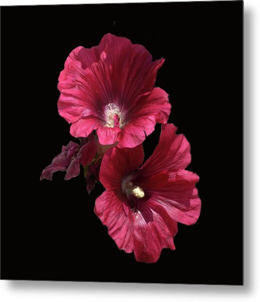 Hollyhock Glory Metal Print