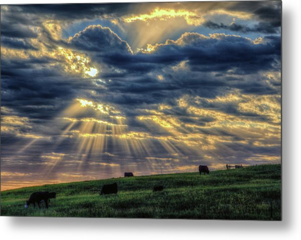 Holy Cow Metal Print