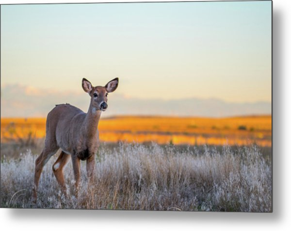 Metal Print featuring the photograph Home On The Range by Philip Rodgers