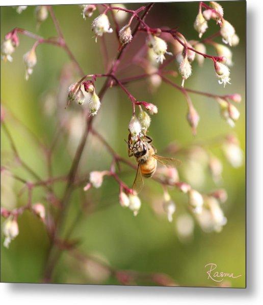 Honey Acrobat Metal Print