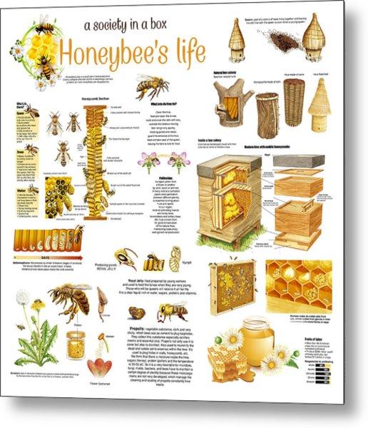 Honey Bees Infographic Metal Print