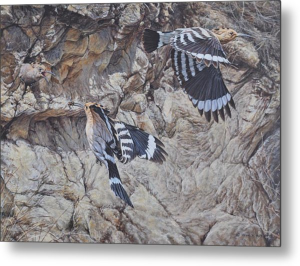 Hoopoes Feeding Metal Print
