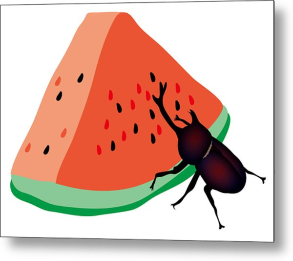 Horn Beetle Is Eating A Piece Of Red Watermelon Metal Print