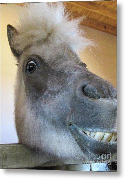 Horse 11 Metal Print