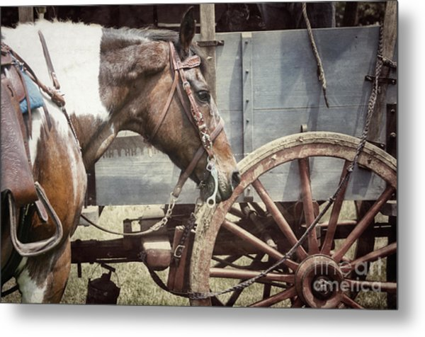 Horse And Wheel Metal Print by Steven Digman