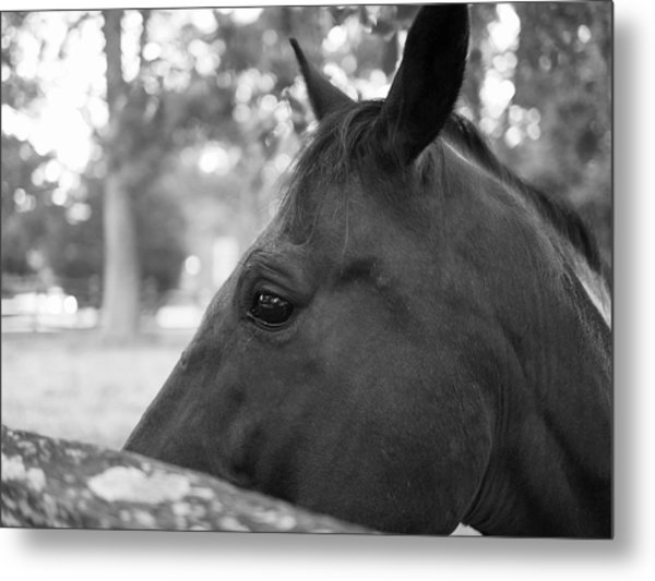 Horse At Fence Metal Print