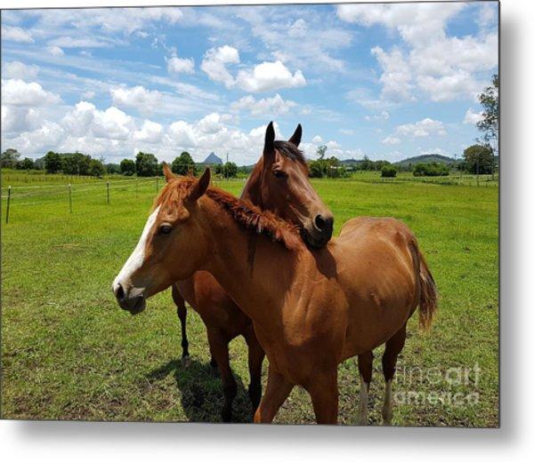 Horse Cuddles Metal Print
