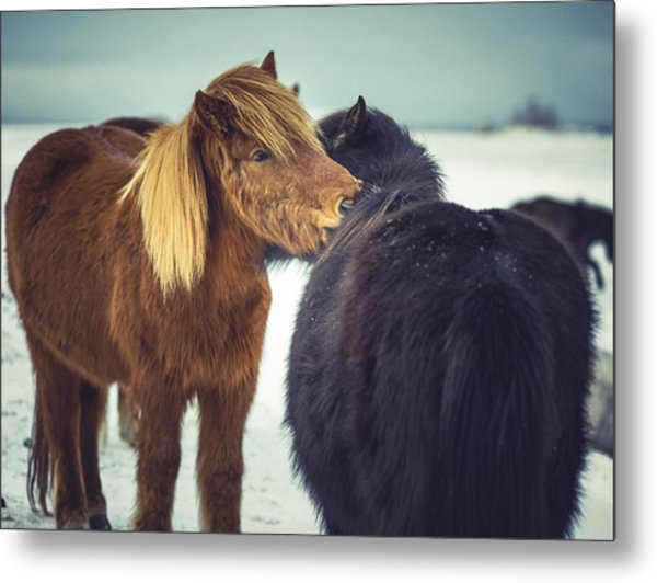 Horse Friends Forever Metal Print