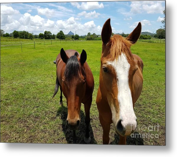 Horse Friendship Metal Print