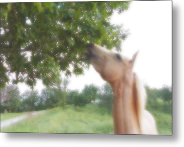 Horse Grazes In A Tree Metal Print