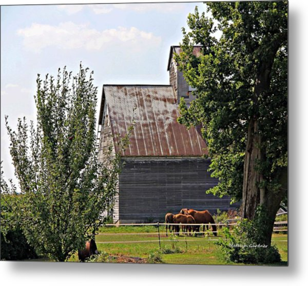 Metal Print featuring the photograph Horse Haven by Matalyn Gardner