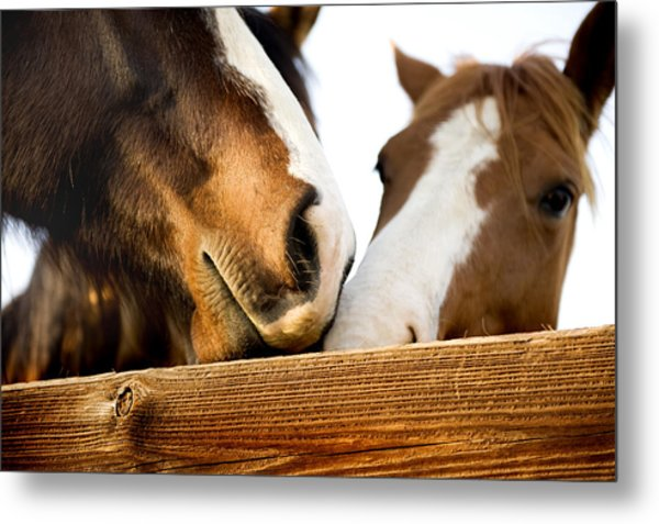 Horse Kisses Metal Print by Michelle Shockley