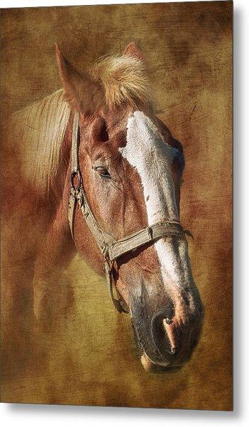 Horse Portrait II Metal Print